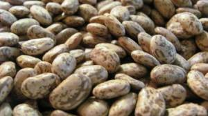 Don't these organic pinto beans look gorgeous?